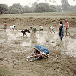 Young people gather to collect fish after heavy rains. <br /> During the monsoon, heavy rainfall pushes water in to small tributaries causing fish to become stuck in the mud.