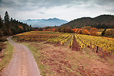 USA, Oregon, Medford, Woolridge Creek Winery is located in the heart of the Applegate River Valley in Southern Oregon, the first grape vines were planted at Woolridge Creek in the 1970s