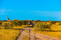 Safari vehicle and giraffes, Nxai Pan National Park, Botswana.