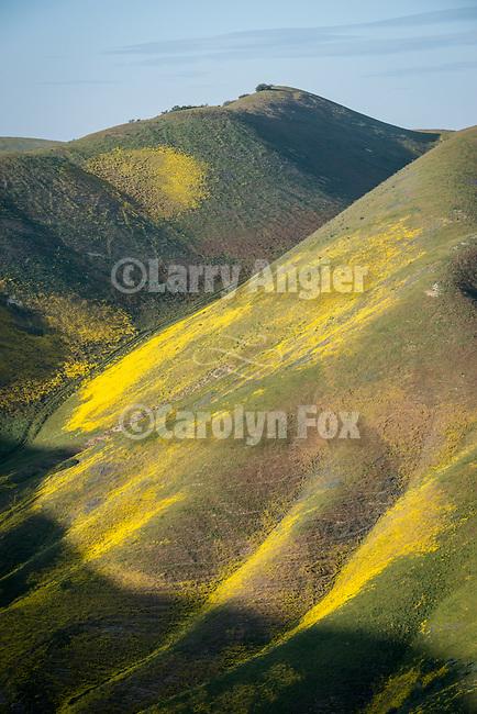 Crocker Canyon, colorful wildflowers cover the Temblor Range, Carrizo Plain National Monument, San Luis Obispo County, Calif.
