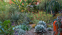 Foliage textures with Yucca, Agave, Salvia, Palm in Kuzma Garden