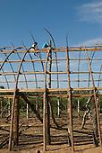Xingu Indigenous Park, Mato Grosso State, Brazil. Aldeia Barranco Queimado. Oca house under construction; builder lashing roof structure.