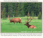 It's not uncommon to view elk (wapiti) in the mountains of Colorado.<br />