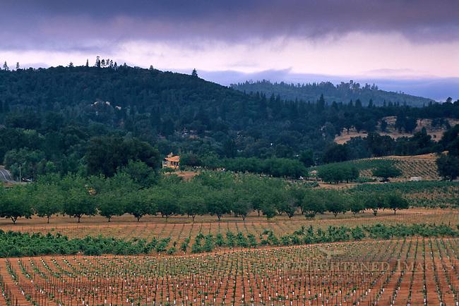 Morning light over vineyards near Plymouth, Shenandoah Valley, Amador County, California