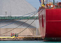 Crews aboard the Federal Mackinac slowly winch the 185 metre ship into place at Cargill Limited grain elevators on Sarnia Harbour while   another crew watches from the dock.