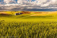 Contoured rolling hills of wheat and grain silos, Palouse region of eastern Washington.