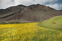 A filed of Colza, also known as rapeseed, in the village of Sarhad...In Sarhad village, inhabited by Wakhis people. It is the end of the jeepable road in the Wakhan corridor, and the beginning of the trek up to the Little Pamir where the Afghan Kyrgyz live.