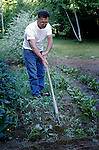 Hoeing vegetable garden