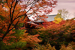 Colorful autumn scenery of a Japanese garden with beautiful red maple trees at Tofuku-ji Buddhist temple in Kyoto, Japan 2017.
