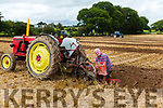 Michale Coomey Templenoe in action at the South Kerry Ploughing Championships in Fossa on Sunday