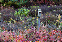 Birdhouse in autumn meadow.