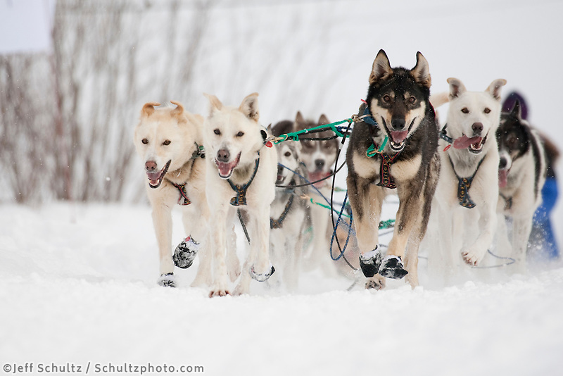 Cindy Gallea dogs run down the street to the checkpoint at Takotna during Iditarod 2009