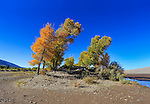 Bevt over trees during autumn in The Great Sand Dunes National Park and Preserve, Colorado; USA