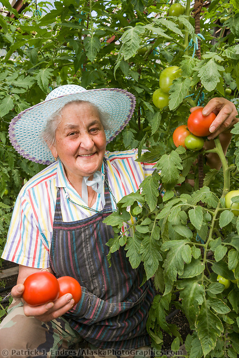 Palmer resident Pia Cottini grows tomatoes in her greenhouse