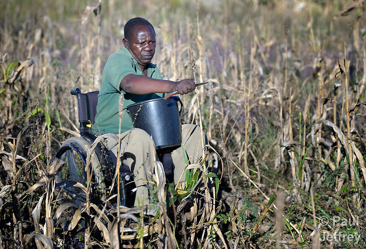 Henry Gwese is a farmer in Charumengwe, Zimbabwe. His legs were paralyzed by cerebral malaria. Yet he continues farming, using an appropriately designed and fitted wheelchair provided by the Jairos Jiri Association with support from CBM-US.