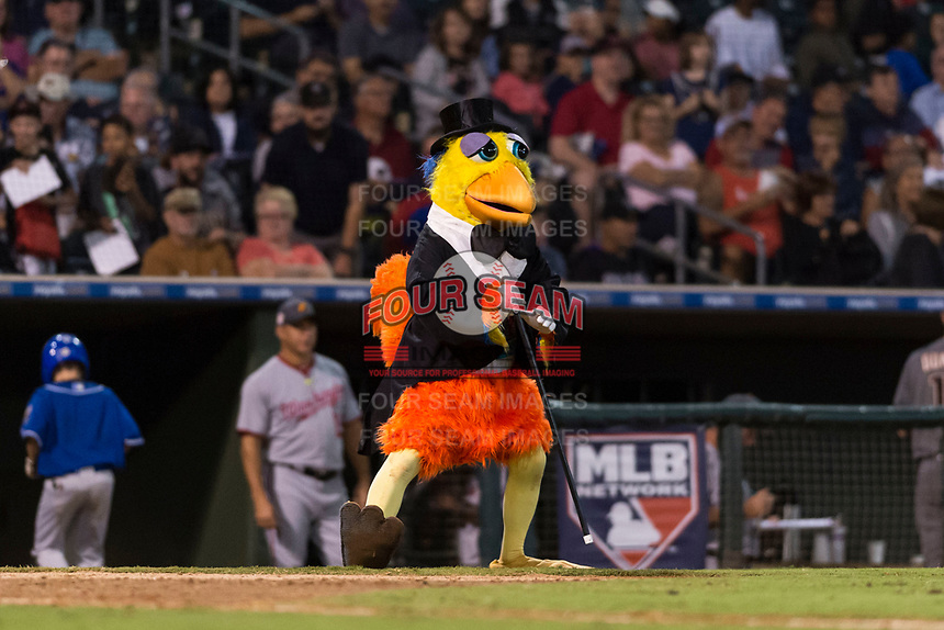 The San Diego Chicken, also known as the Famous Chicken or just The Chicken, entertains the crowd during the Fall Stars game at Surprise Stadium on November 3, 2018 in Surprise, Arizona. The AFL West defeated the AFL East 7-6 . (Zachary Lucy/Four Seam Images)
