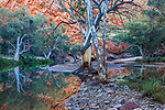 Gorge in the MacDonnell Ranges, Northern Territory, Australia; gum trees