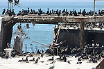 Cormorants and gulls on cement ship at Seacliff State Beach