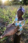 KENIA, ADS Anglican Development Services of Mount Kenya East, Stadt Embu, Dorf Gichunguri, Projekt Regenwasserauffang an einem Felsen und Speicherung in Tanks zur Nutzung in Duerreperioden, Agnes Irima, 44 Jahre, auf ihrem Hof, mit Kalabasse mit Sorghum Korn, im Maisfeld