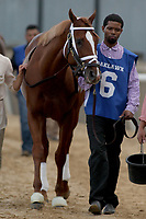 HOT SPRINGS, AR - MARCH 18: Malagacy #6, before the running of the Rebel Stakes race at Oaklawn Park on March 18, 2017 in Hot Springs, Arkansas. (Photo by Justin Manning/Eclipse Sportswire/Getty Images)