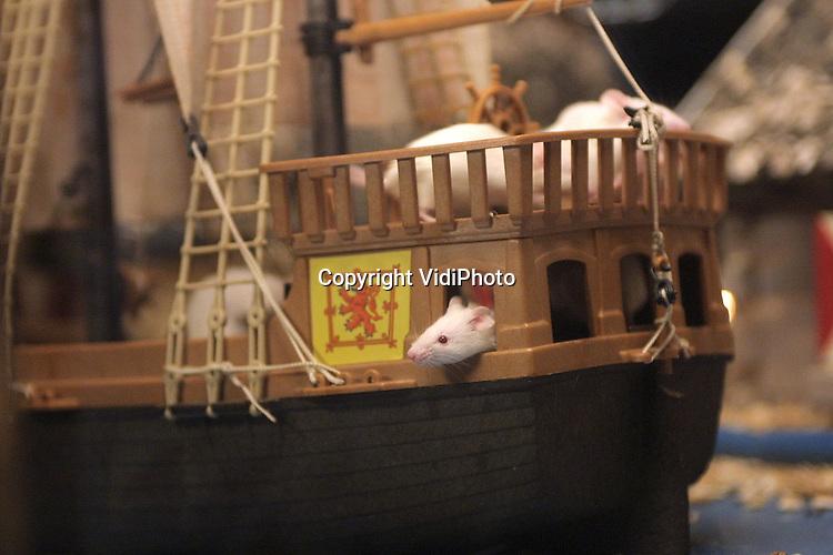 Foto: VidiPhoto..RHENEN - Ruim 250 witte muizen bevolken de zojuist ingerichte muizenstad van Ouwehands Dierenpark. Maandag kregen alle muizen er hun onderkomen, maar afgelopen weekend mocht het publiek al even een kijkje nemen in de half ingerichte stad. Resultaat: Ouwehands mist muizen. Enkele bezoekers hebben blijkbaar een greep gedaan in de open glazen bak. Vanaf zaterdag is er een zogenaamde witte tocht in het park, langs de tientallen andere witte dieren.