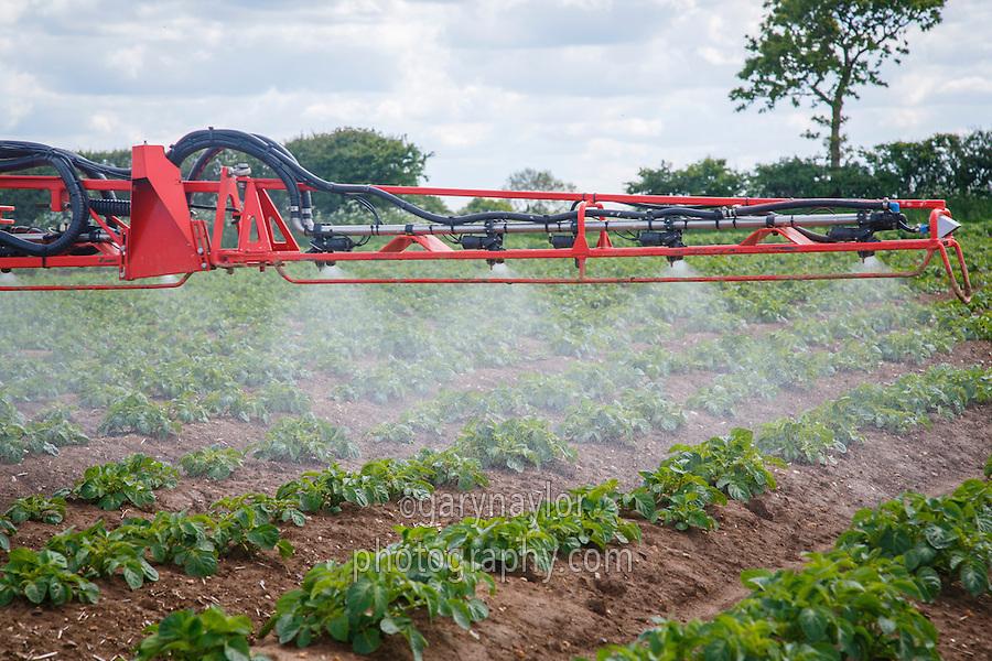 Sands Vision sprayer applying second blight spray to Maris Piper - Norfolk, May