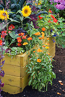Sunflowers, calendula, veggies, marigolds, kale, raised bed and garden soil