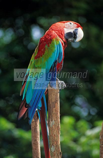 Asie/Malaisie/Kuala Lumpur: Parc aux oiseaux - Ara