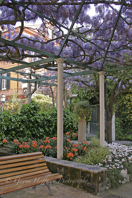 Wisteria covered arbor. Sorrento, Italy