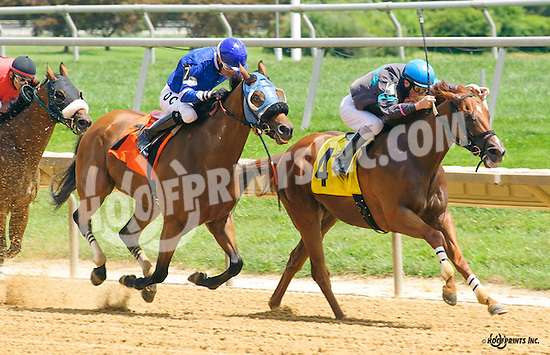 Long May You Run winning at Delaware Park on 8/10/16