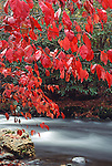 Fall foliage along the Oconaluftee River, Great Smoky Mountains National Park, North Carolina, USA