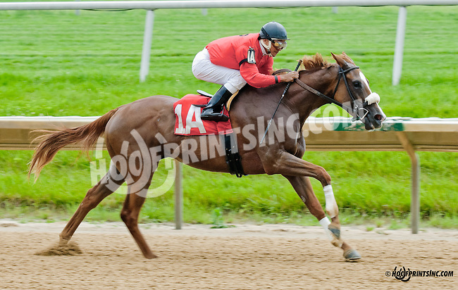 Penny's Chime winning at Delaware Park on 6/17/13