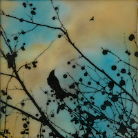 Encaustic painting with photography of crow in branches silhouette against brilliant sky.
