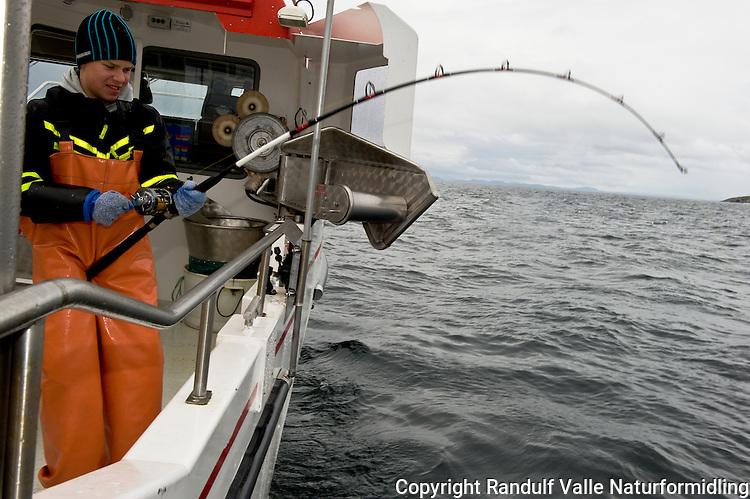 Gutt kjører fisk under havfiske. ---- Boy fighting fish.