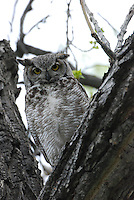 Birds | Owls | Eagles