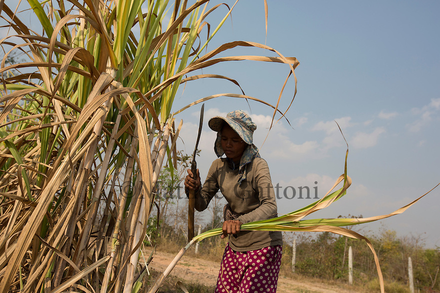 "Cambodia - Kampong Speu Province - Louv Veoun, 39, working in the sugarcane plantation. ""I don't want money, I want my old land back. It is the land of my ancestors"". Louv Veoun, 39 and mother of 8, was living in a small cottage on her rice field in Kork until March 2010, when she was dispossesed of her two hectares of land and compensated with 25 USD. She was forced to abandon her house and settle in a piece of land belonging to some of her relatives, close to the plantation. Today, she lives in utter poverty together with her family."