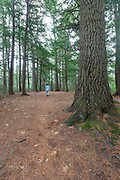 Softwood forest at the Dells Conervation Area in Littleton, New Hampshire USA.