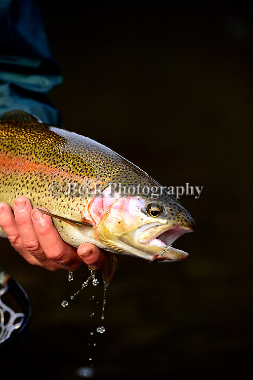 FLY FISHING IMAGE NOV 2015