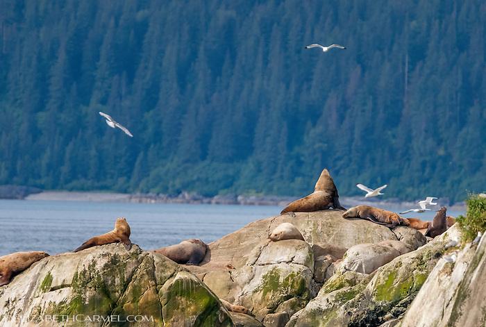 Glacier Bay Afternoon