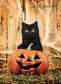 Xavier, ANIMALS, cats, photos, SPCHCATS718,#A# Katzen, gatos