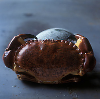 Europe/France/Bretagne/29/Finistère: Crabe, Tourteau ou Dormeur - Stylisme : Valérie LHOMME //   France, Finistere, crab or edible crab (design by Valerie Lhomme)