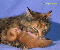 SH31-002z  Cat - mother cleaning kittens