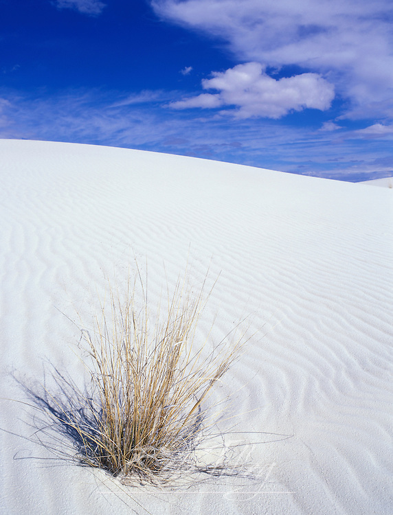 USA, New Mexico, White Sands NM, White Sand Dune