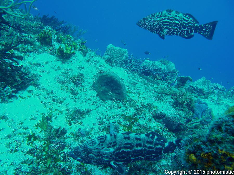 big ass groupers