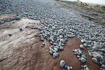 Attrition and abrasion on the wave cut platform as pebbles are rounded and transported, Watchet, Somerset, England
