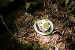 A hat lies in the undergrowth in Aokigahara Jukai, better known as the Mt. Fuji suicide forest, which is located at the base of Japan's famed mountain west of Tokyo, Japan.