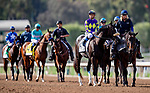MAR 07: Honor AP before the San Felipe Stakes at Santa Anita Park in Arcadia, California on March 7, 2020. Evers/Eclipse Sportswire/CSM