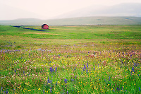 Zumwalt Prairie Preserve with wildflowers and barn in rain storm. Oregon