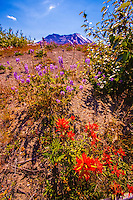 Wildflowers at the Mount