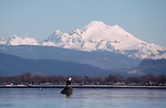 Bald eagle, Mount Baker, Skagit River Estuary, winter, Puget Sound, Washington State, Haliaeetus leucocephalus;